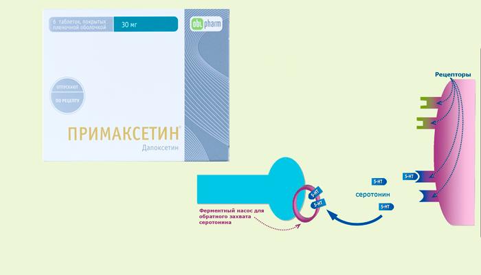 Обратный захват серотонина препаратом Примаксетин для улучшения эякуляции