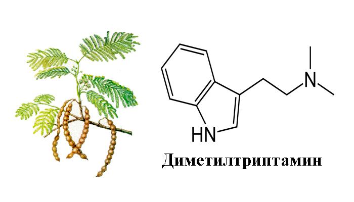 Действующее вещество Анаденантеры иноземной - диметилтриптамин