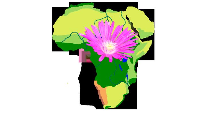Обитание растения Делосперма в Африке