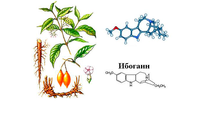 Алкалоид ибогаин в составе корня Ибоги