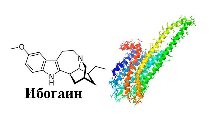 Воздействие ибогаина на 5HT-2A рецептор при употреблении корня Ибоги