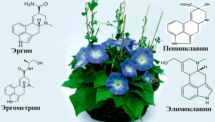 Химический состав Ипомеи небесно-голубой