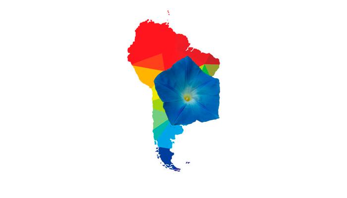 Обитание Ипомеи небесно-голубой в Южной Америке