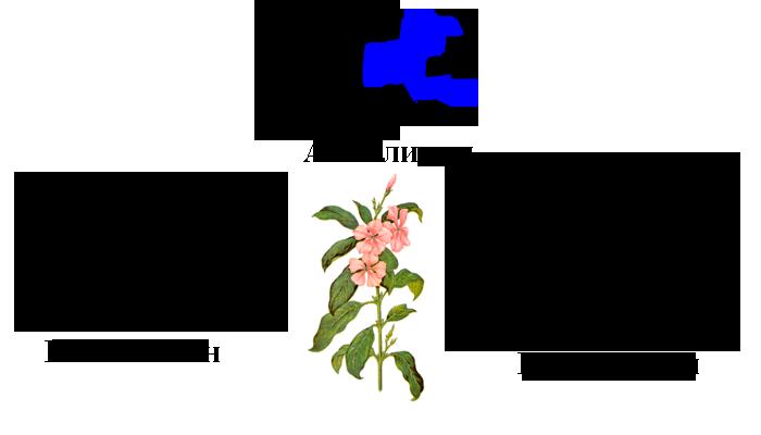Химический состав Катарантуса розового