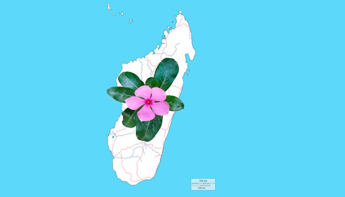 Историческая родина Барвинка розового - Мадагаскар