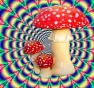Красный мухомор как наркотик: правда или ужасный вымысел?