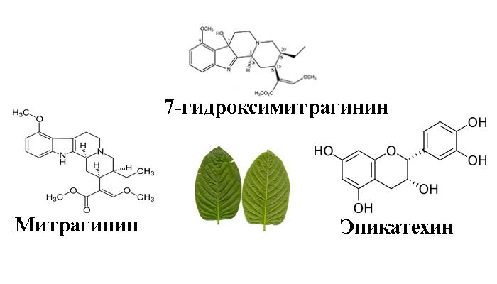 Химический состав Кратома